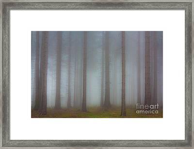 Forest In The Fog Framed Print by Michal Boubin