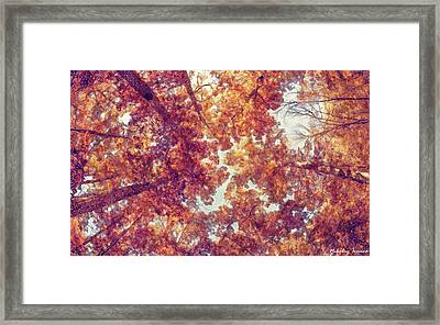Forest-into The Skies-01 Framed Print