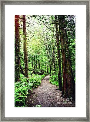 Forest Invitation Framed Print by Lincoln Rogers