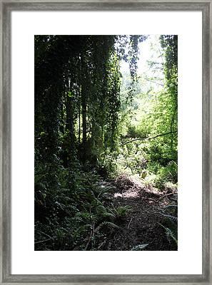 Forest Jungle Framed Print