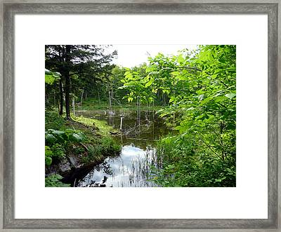 Forest Lake Hideout Framed Print by Dmytro Toptygin
