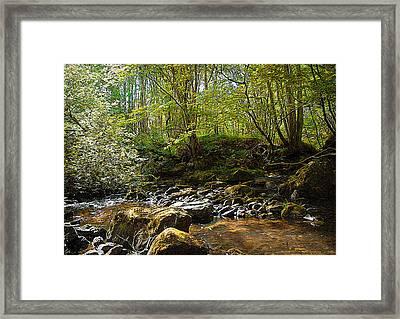 Forest Landscape Framed Print by Svetlana Sewell
