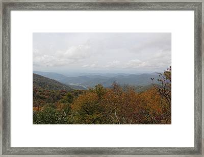 Forest Landscape View Framed Print