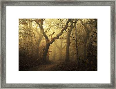 Forest Framed Print by Leif L?ndal