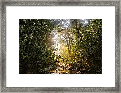 Forest Light At Western Ghats In Karnataka In India Framed Print