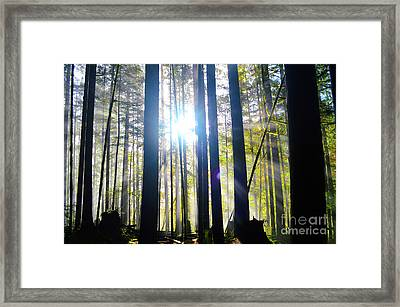 Forest Light Rays Framed Print