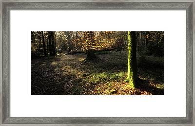 Forest Lights Framed Print