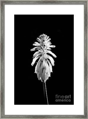 Forest Llily Framed Print by Tim Gainey