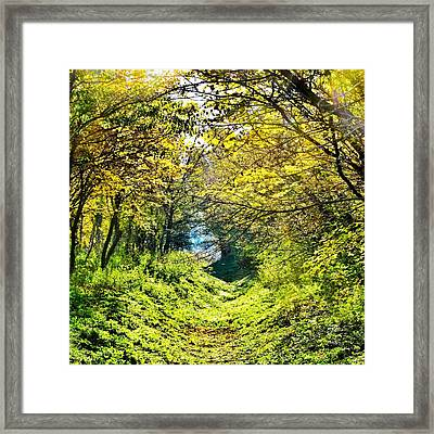 Forest Framed Print by Marianna Mills