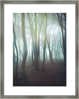 Forest Framed Print by Mark Owen