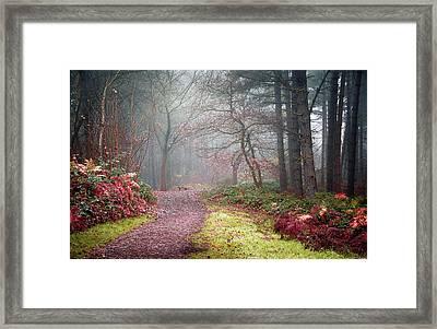 Forest Mist Framed Print