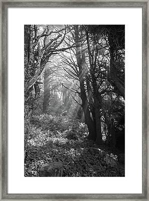Forest Morning Framed Print by HW Kateley