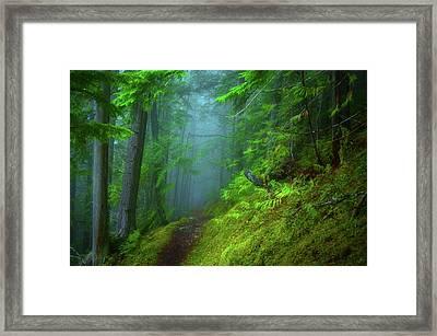 Forest Mysteries 2 Framed Print