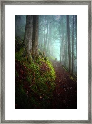 Forest Mysteries 3 Framed Print