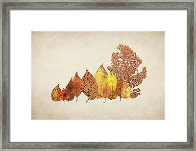 Forest Of Autumn Leaves II Framed Print by Tom Mc Nemar
