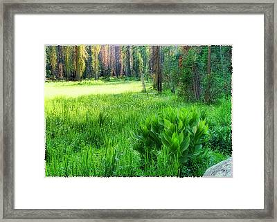 Forest Of Color Framed Print by Michael Cleere