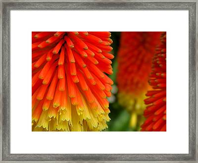 Forest Of Dreams Framed Print by Edan Chapman