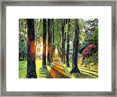 Forest Of Enchantment Framed Print by David Lloyd Glover