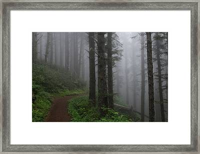 Forest Of Fog Framed Print