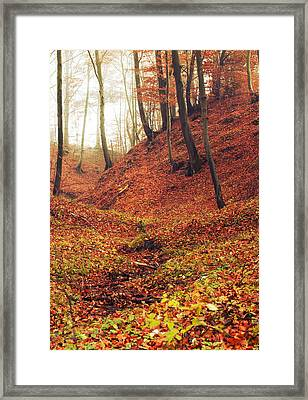 Forest Of November Framed Print by Art of Invi