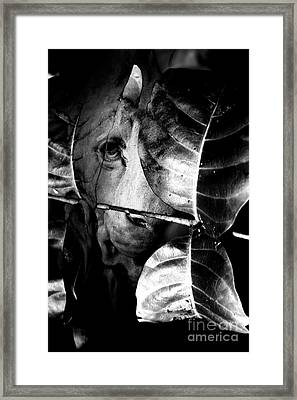 Forest Of The Labyrinth Lion Framed Print by Jorgo Photography - Wall Art Gallery