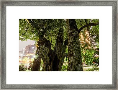 Framed Print featuring the photograph Forest Of Tokyo by Tatsuya Atarashi