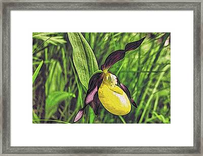 Forest Orchid Framed Print