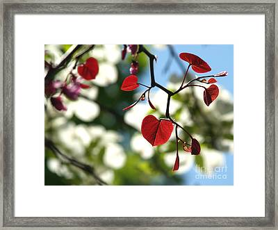 Forest Pansy Redbud Leaves In Spring Framed Print by Anna Lisa Yoder