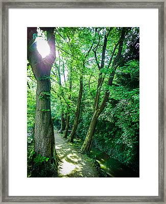 Framed Print featuring the photograph Forest Path by Bee-Bee Deigner