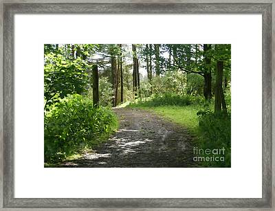 Forest Path. Framed Print