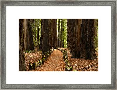 Forest Path Framed Print by Eric Foltz
