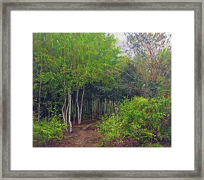 Forest Path Leading Into The Forest Framed Print