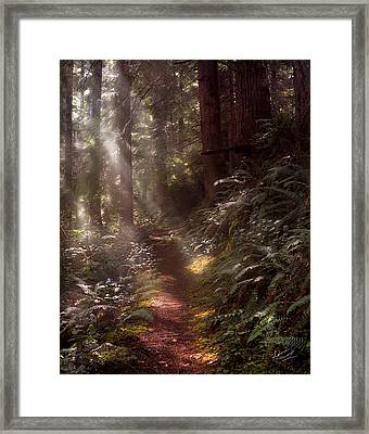 Forest Path Framed Print by Leland D Howard