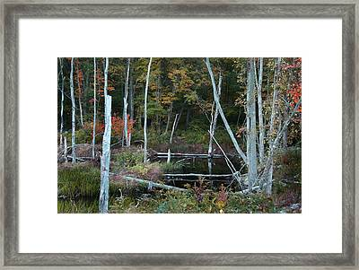 Framed Print featuring the photograph Forest Pond by Joseph G Holland