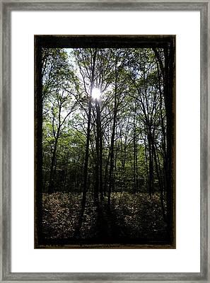 Forest Primeval, Illuminated Framed Print