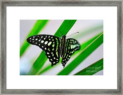 Forest Queen Framed Print by Charles Dobbs