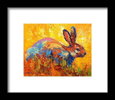 Bunny Rabbit Framed Prints