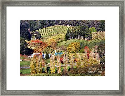 Forest Range, Adelaide Hills Framed Print by Bill  Robinson