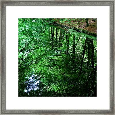 Forest Reflection Framed Print by Dave Bowman