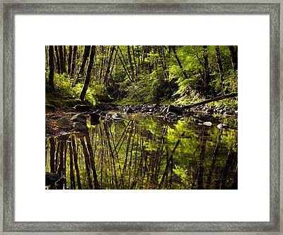 Forest Reflections Framed Print by Leland D Howard
