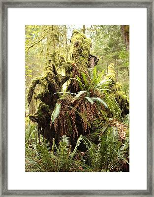 Forest Revival Framed Print by Carol Groenen