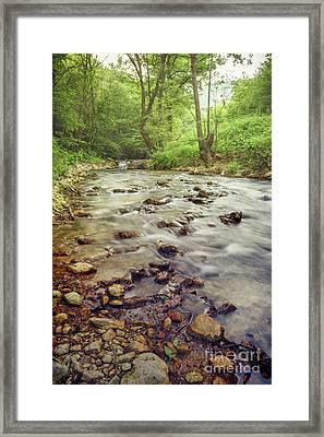 Forest River Cascades Framed Print