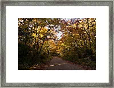 Forest Road - A Joy Ride Into Autumn Framed Print