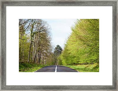 Forest Road Framed Print by Yoel Koskas