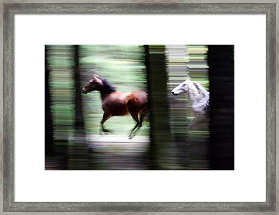 Forest Run Framed Print by Randall Ingalls