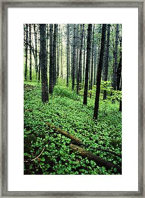 Forest Scenic Framed Print by Tony Ramos
