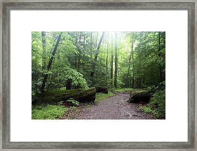 Forest Setting Smoky Mountains National Park Framed Print
