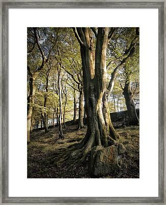 Forest Shadow Framed Print