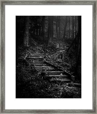 Forest Stairs Framed Print