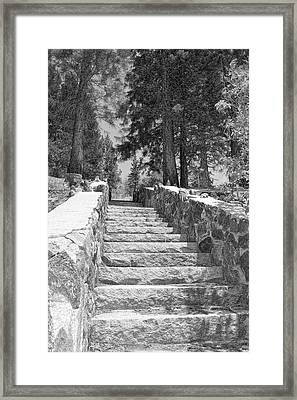 Forest Stairway Framed Print